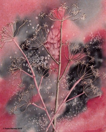 Queen Anne's Lace IV