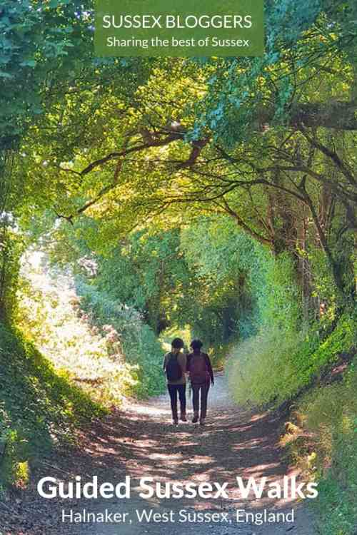 Halnaker tree tunnel guided walk in West Sussex, England