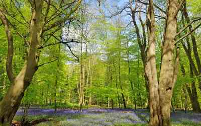 Woodland walks in West Sussex | Nore Wood