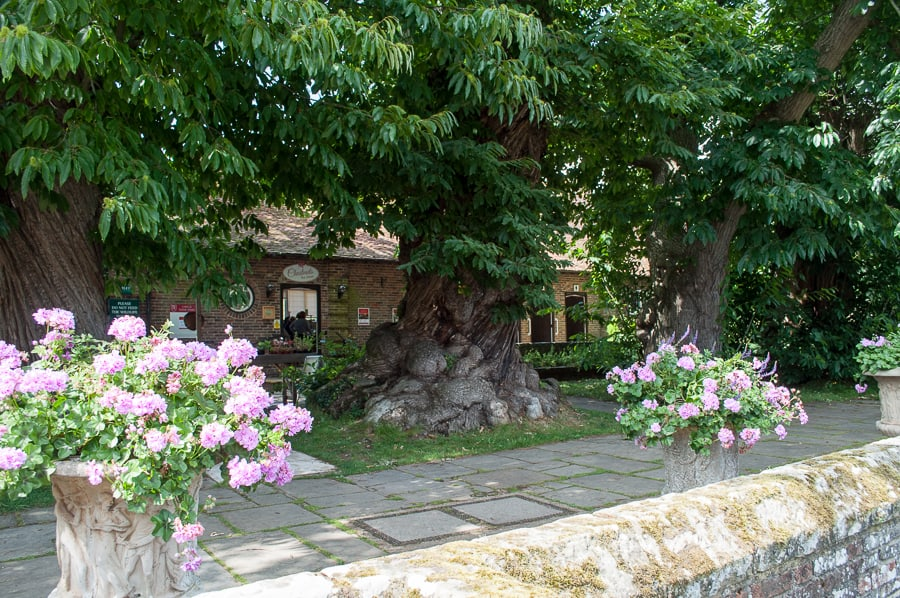 Chestnut Tree Avenue