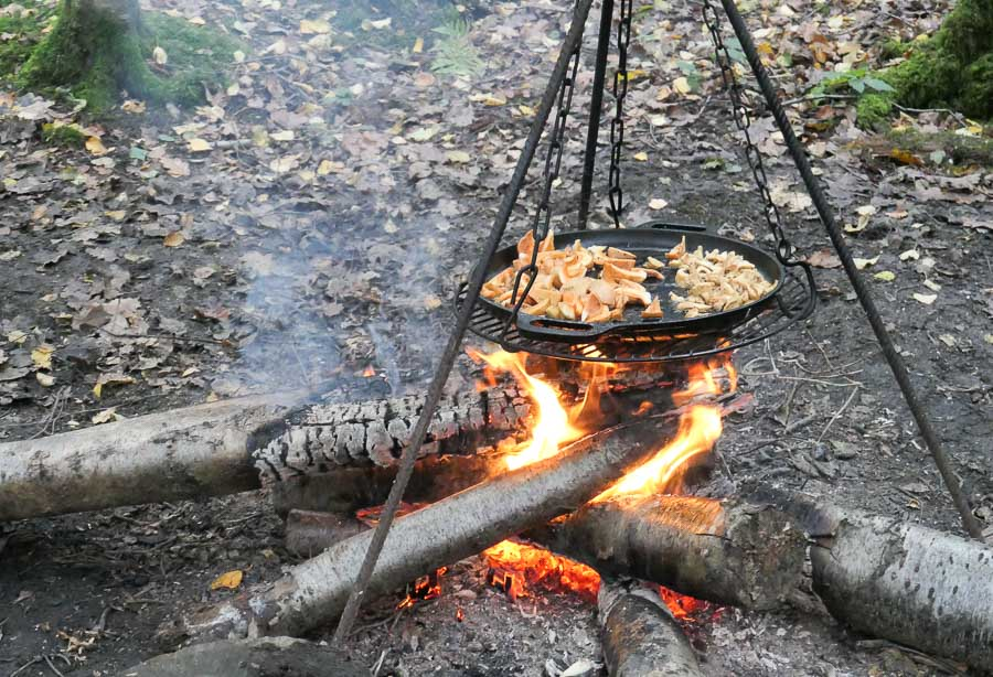 Cooking mushroom and fungi on the campfire