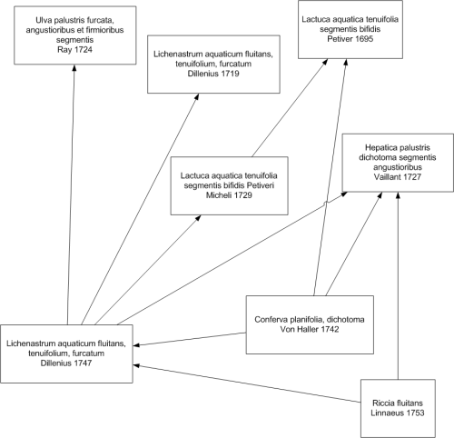 small resolution of diagram showing earlier authorities of riccia fluitans