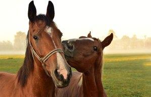 Sussex horses