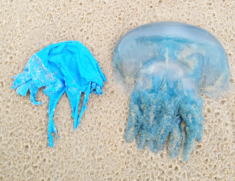 balloon-jellyfish-yaroomba-cropped1