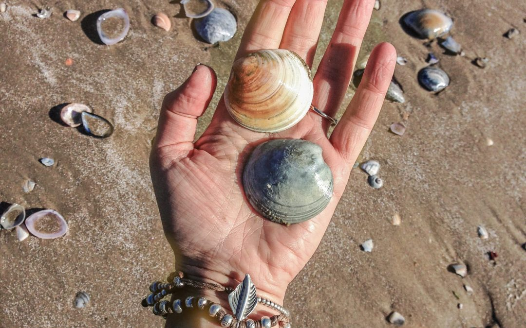 Symbols for Sustainability: The Shell