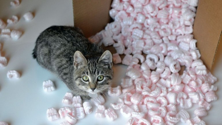 Are Dissolvable Packing Peanuts Toxic?