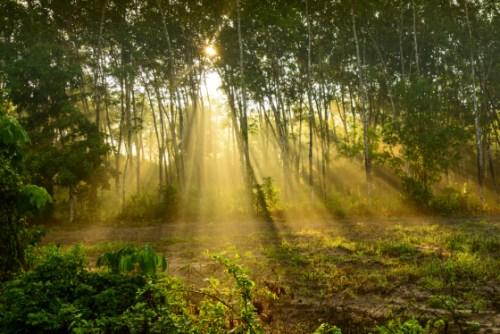 Urban Forest -- Afforestt