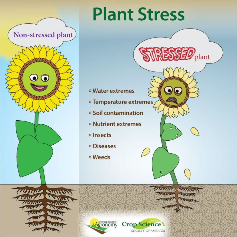 Infographic about plant stresses like water and temperature extremes, insects, etc.