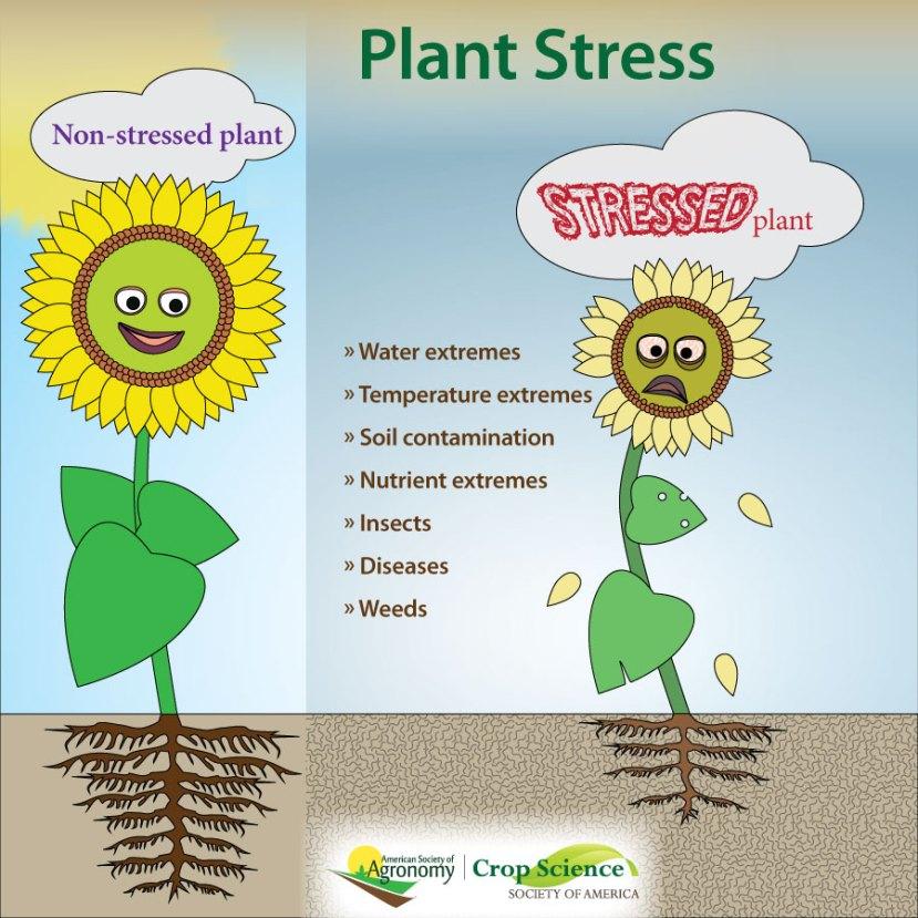 Infografía sobre el estrés de las plantas como el agua y las temperaturas extremas, los insectos, etc.