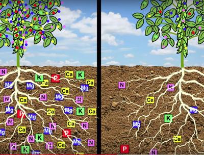 dibujos animados de raíces, plantas y nutrientes.