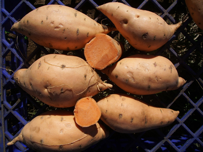sweet potatoes raw and cut