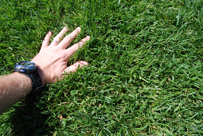 Lush grass with hand showing softness