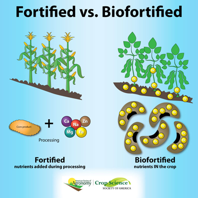 BioFortifiedFood