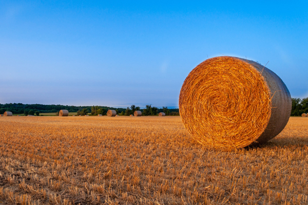 Large cylindrical bale of hay along farmland with blue sky