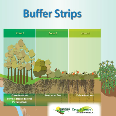 Infographic showing the purpose of each zone of a buffer strip.