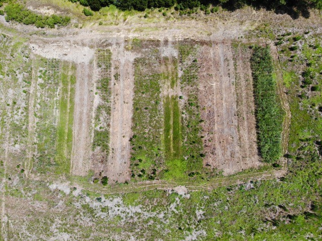 drone shot showing strips of green and brown on a farm trial field