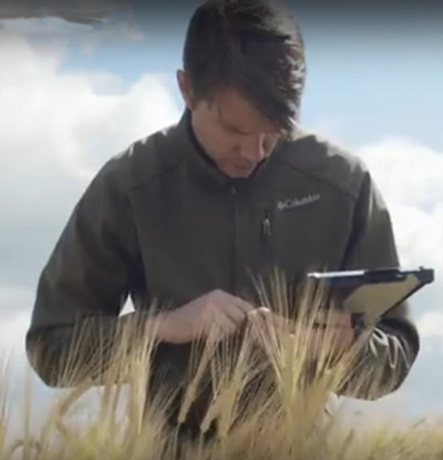 Man in barley field with tablet collecting data