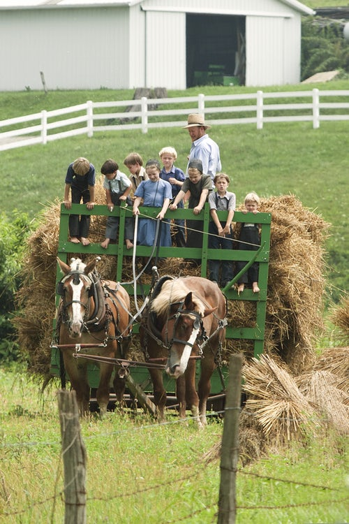 children on hay ride with horses