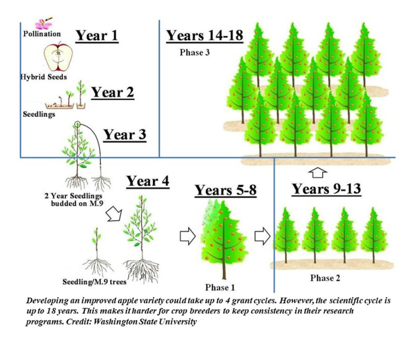chart showing various stages of plant breeding by the year.