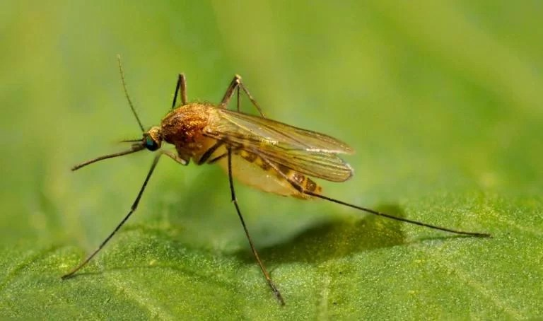 Hopes for climate linkage to mosquito population