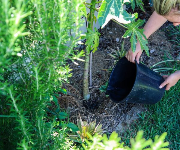 Gardening with Water Restrictions – Water-Saving Tips