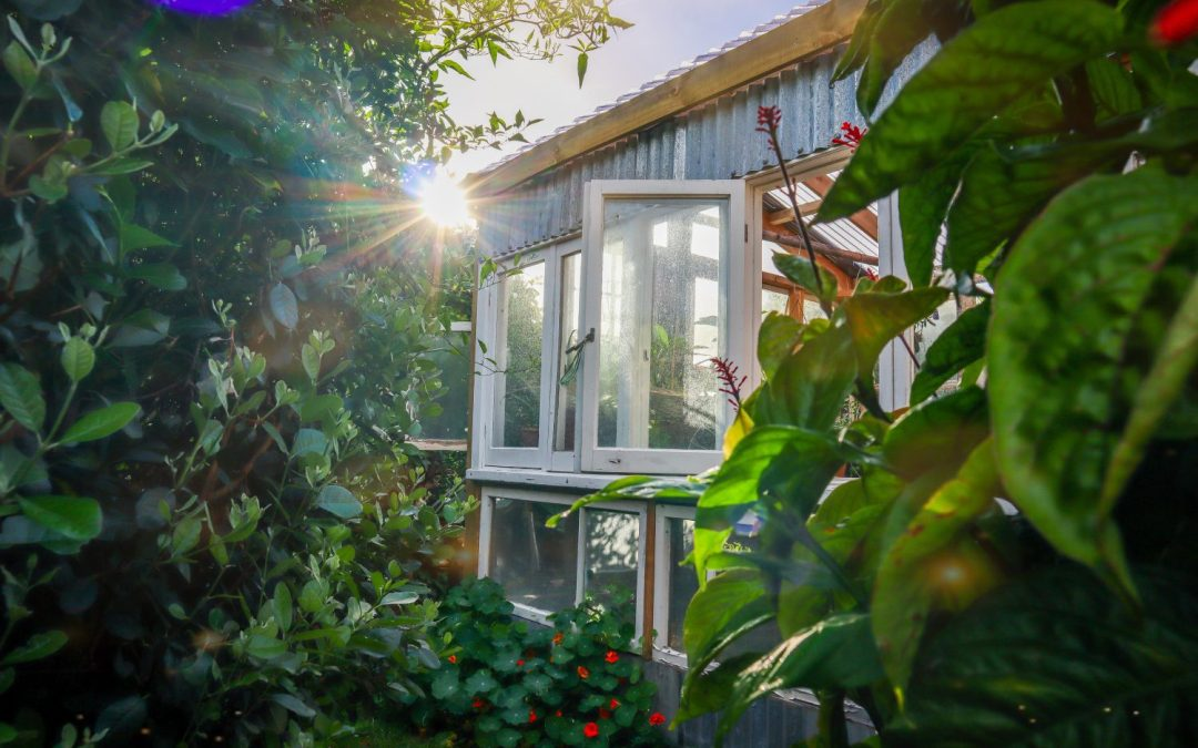 DIY Greenhouse Built from Recycled Windows