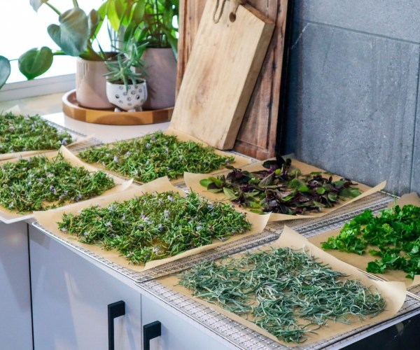 Preserving Herbs from the Garden