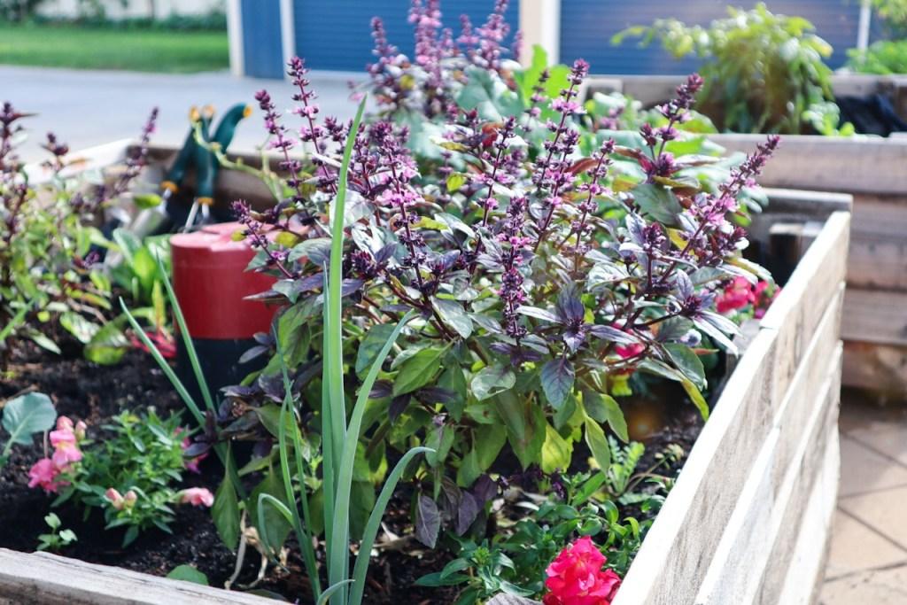 urban permaculture garden