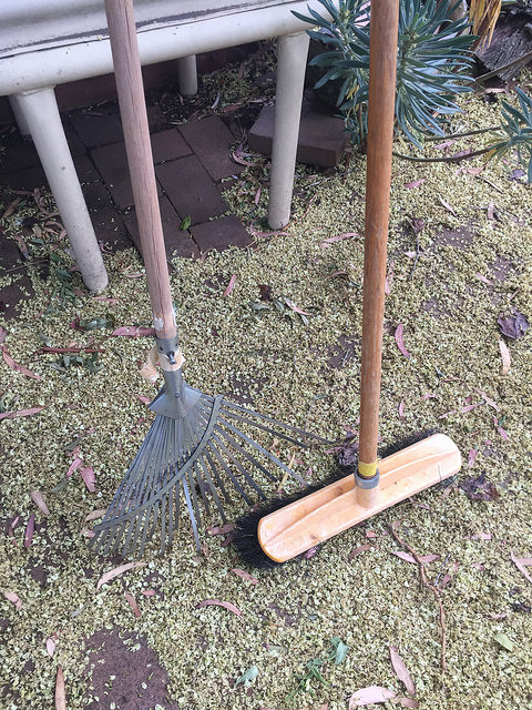 Leaf rake & yellow garden broom standing on paving strewn with yellow flowers