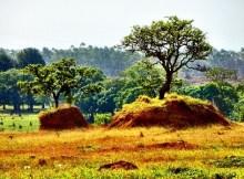Plants facing extinction