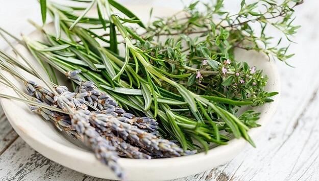 Dehydrating home-grown herbs