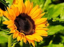 How to support bees in your yard