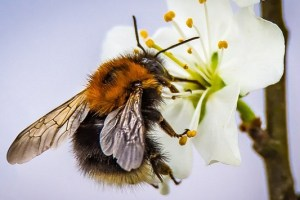 Things you can do to protect pollinators and bees