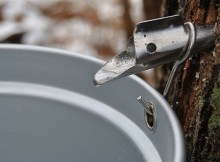 Making maple syrup tips