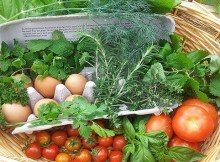 Resolutions for a sustainable food system