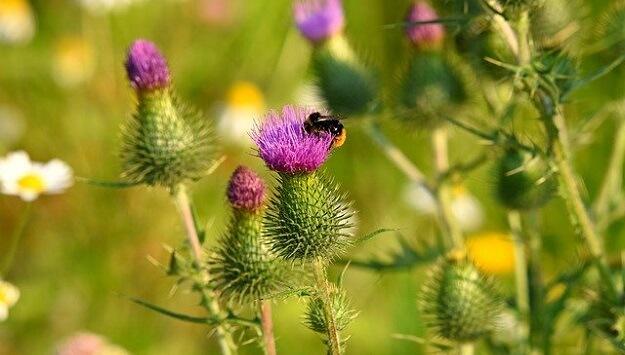 Support native pollinators