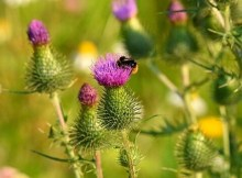 Support native pollinators