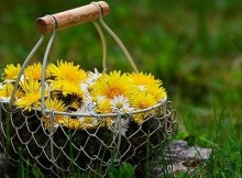 Homemade dandelion wine recipe