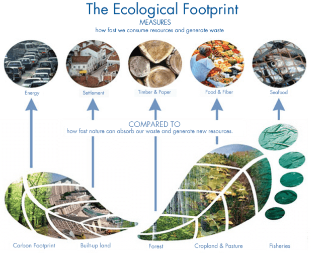 Environmental footprint graphic