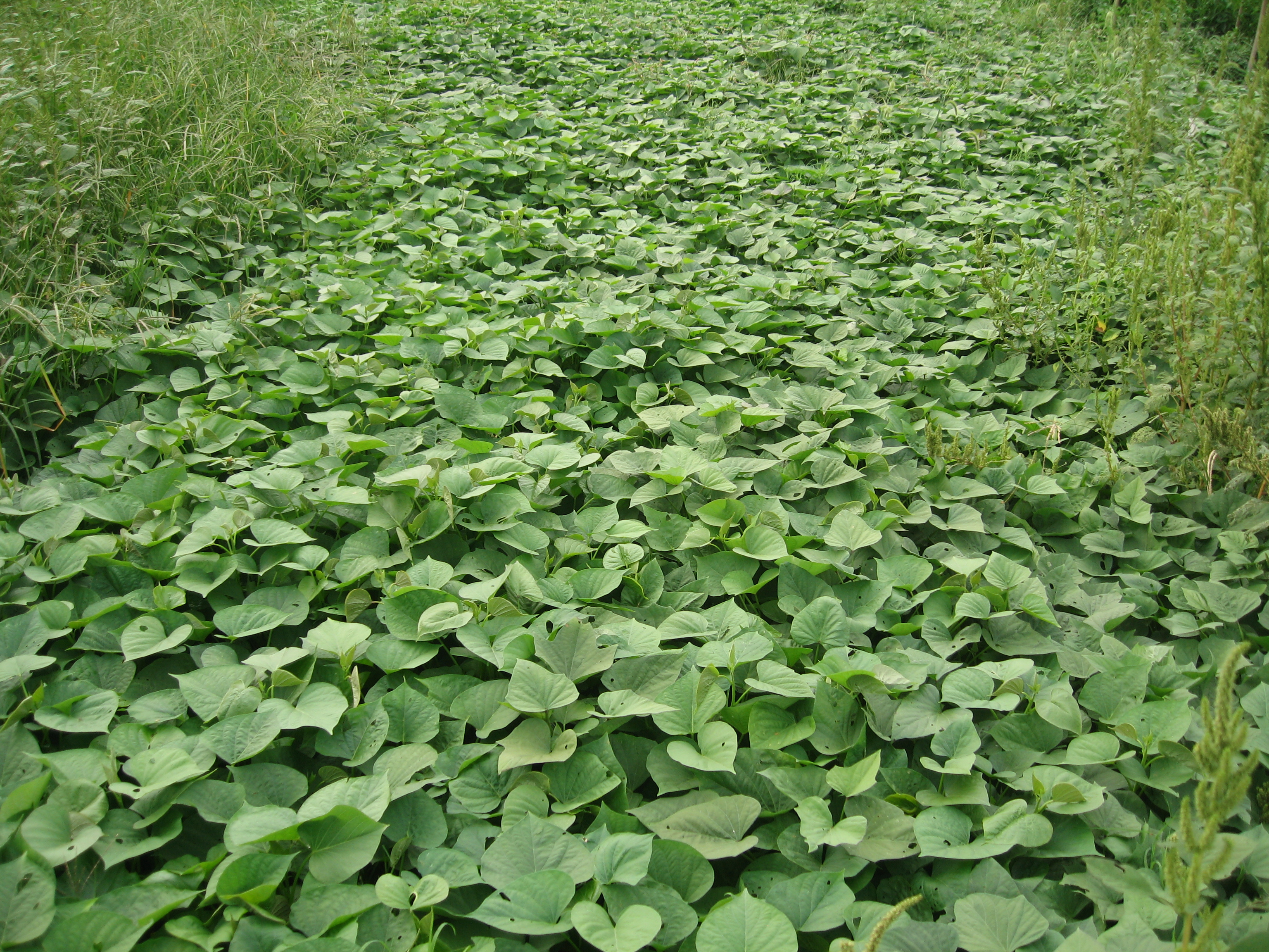 plot diagram for the maze runner how does a water softener work sweet potato field