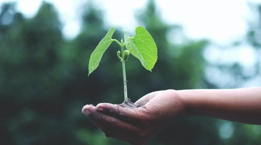 Ecoscenography Knowledge Exchange Platform