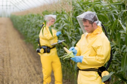 Image result for genetically modified crops