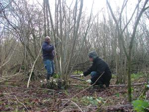 coppicing-hazel-at-self-unlimited