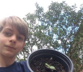 Lockdown competition - Elliot age 11 and sunflowers