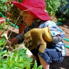 A toddler squating down in the garden, wearing a far-too-big gardening glove in one hand, while appearing to pull out weeds with the other