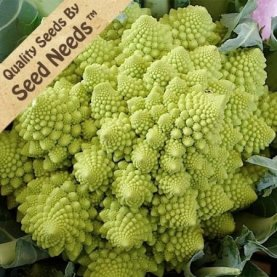 An apple green broccoli with multiple architectural-like spires