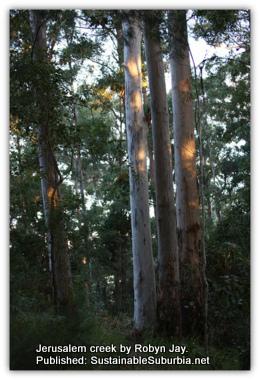 An Australian Forest - Jerusalem creek walk by Robyn Jay.
