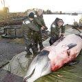 whaleoperation