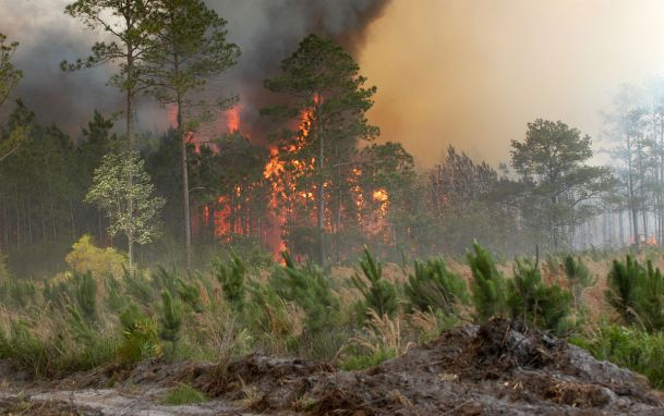 Okefenokee Swamp Fire