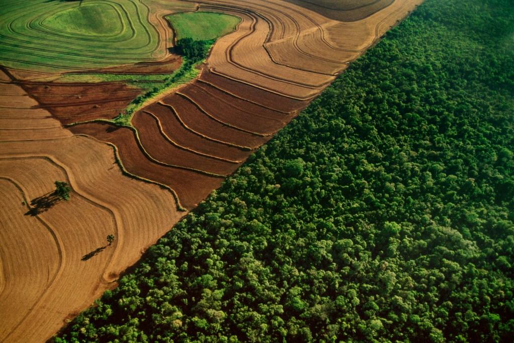 deforestation picture